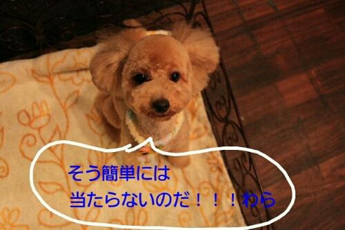 b0130018_228995.jpg