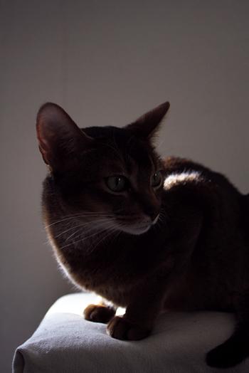 [猫的]緊急地震速報_e0090124_23591180.jpg