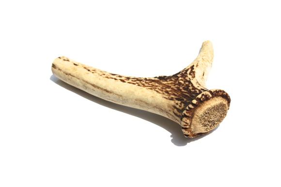 BLACK WOOD Cervus horn ブラックウッド 鹿角 マイクロ_d0217958_130120.jpg