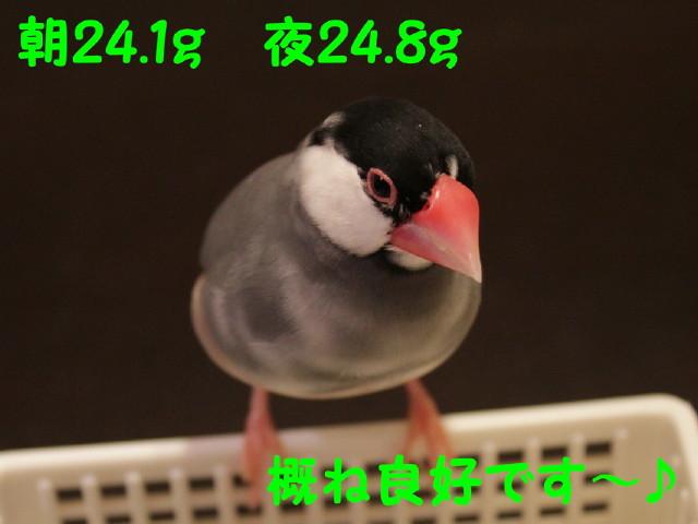 b0158061_23403480.jpg