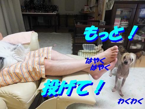 f0179203_934482.jpg
