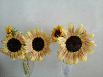 真夏の切花を長くもたせる方法 _a0042928_14273414.jpg