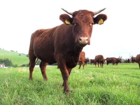 「ウシ見る人々」、あるいは、「ヒト見る牛々」_b0206037_1916521.jpg