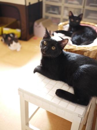 お約束猫 ぎゃぉすてぃぁらみるきぃ編。_a0143140_2236175.jpg