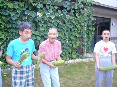 8/21ヘチマの収穫☆_a0154110_13224364.jpg