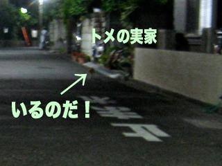 c0211810_1114051.jpg