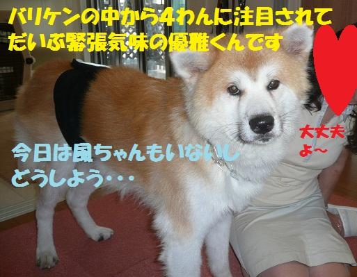 f0121712_15281476.jpg