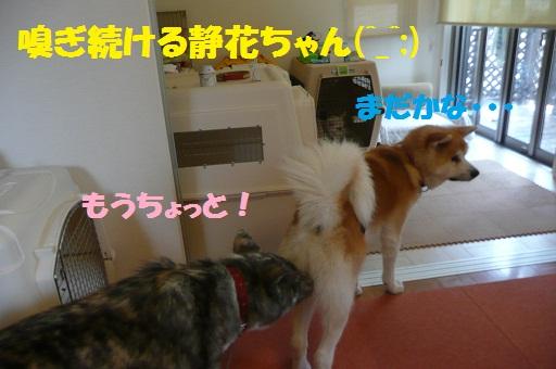 f0121712_15394711.jpg