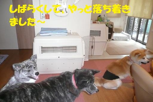 f0121712_1621527.jpg