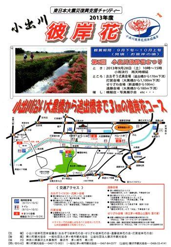 彼岸花 小出川 2013 cluster‐amaryllis at Koide river_d0240916_1426239.jpg