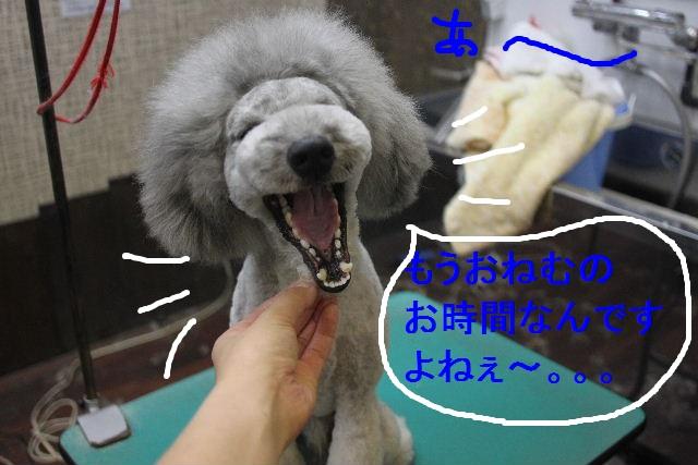 b0130018_081173.jpg