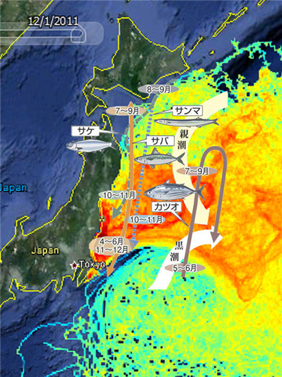 国家の非常事態 福島原発汚染水300トン漏出 30兆ベクレル海へ_c0024539_132686.png