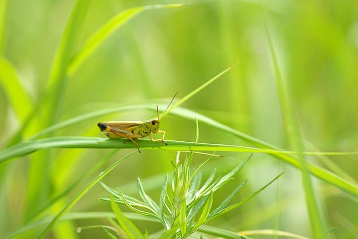 夏の草むら_c0067040_23233761.jpg