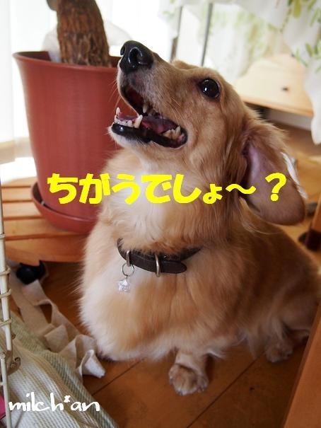 b0115642_22113782.jpg