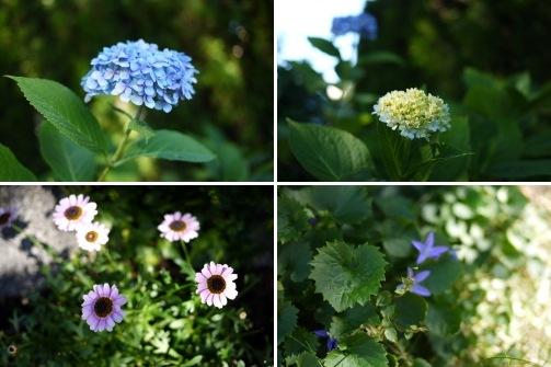 8月後半の庭便りはチョコちゃんと♪_d0129786_143169.jpg