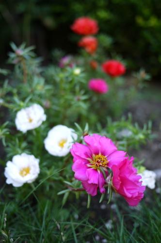8月後半の庭便りはチョコちゃんと♪_d0129786_14562029.jpg