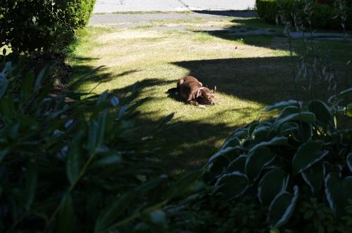 8月後半の庭便りはチョコちゃんと♪_d0129786_15445543.jpg