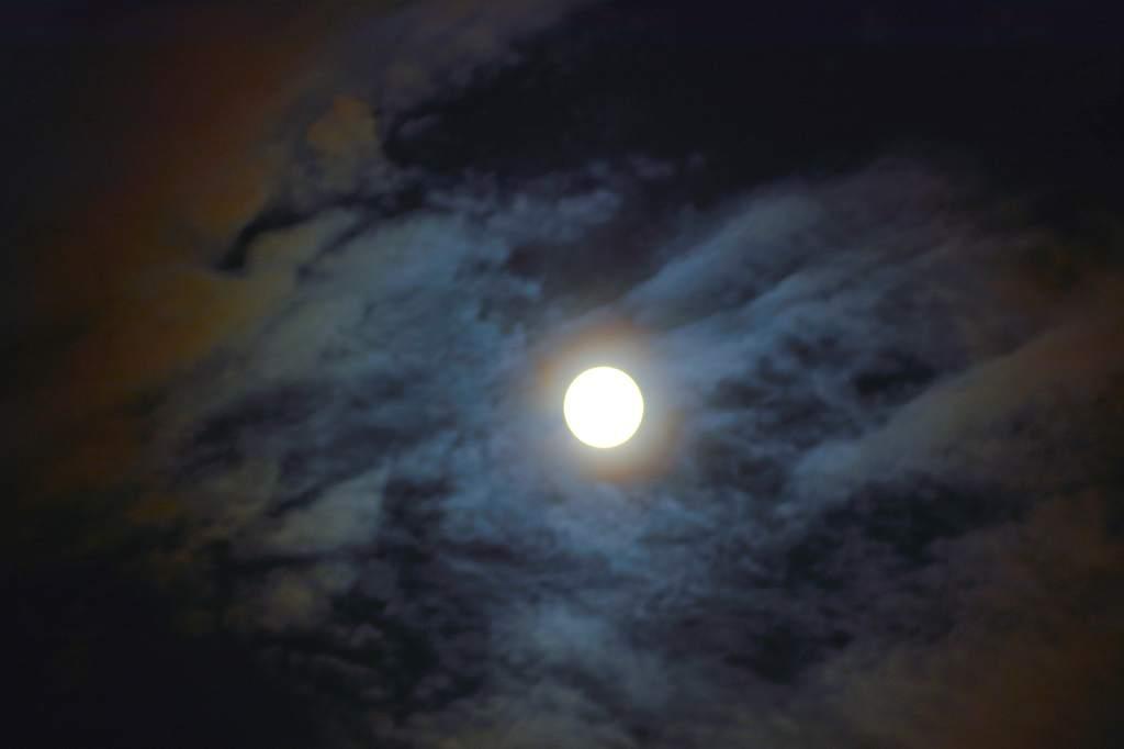 朝夕のカワセミ/ハス・スズメ/雷雲/ブルームーン_b0024798_143761.jpg