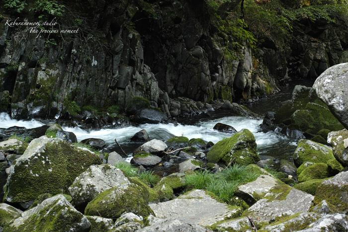 大滝でネッシィーに遭遇!_c0137403_14481035.jpg