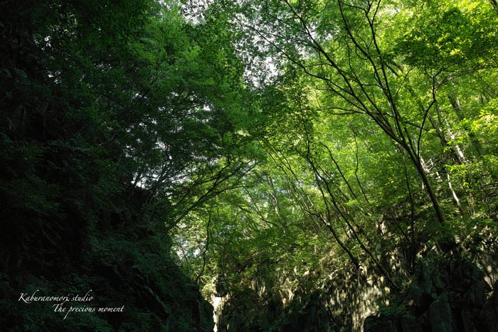 大滝でネッシィーに遭遇!_c0137403_14491670.jpg