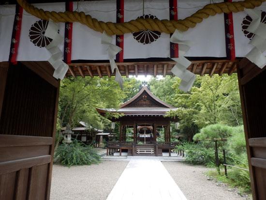京都御苑の百日紅_e0048413_14195842.jpg