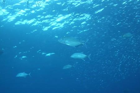13.8.23 海再開。まずは趣味偏向から。_b0100730_20121993.jpg