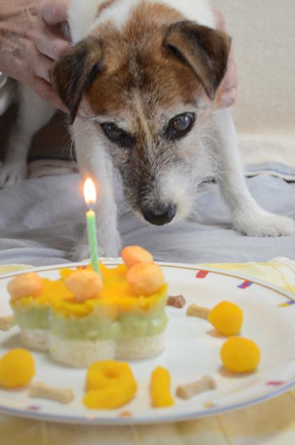 愛犬のこととお休みのお知らせ_c0099133_1155061.jpg