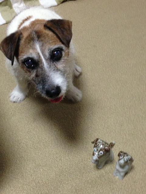 愛犬のこととお休みのお知らせ_c0099133_1163427.jpg