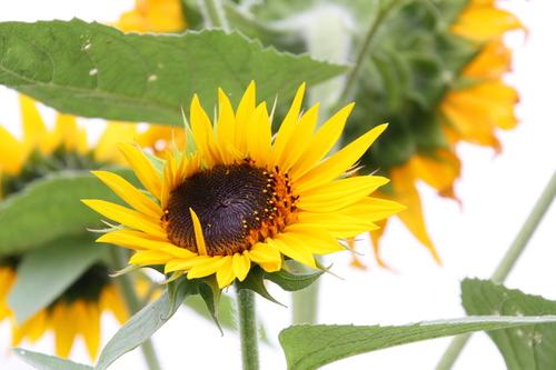 花が咲いていますけど何か? 8月23日_f0113639_1818374.jpg