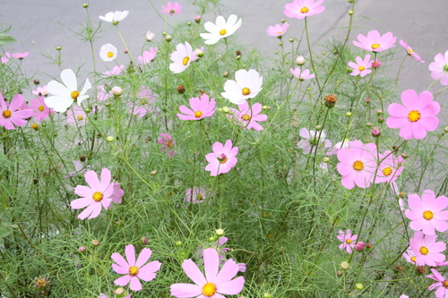 花が咲いていますけど何か? 8月23日_f0113639_1819234.jpg