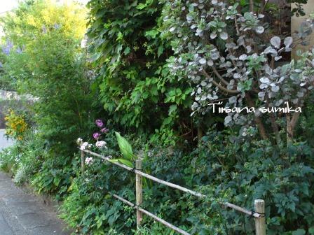 晩夏の庭_a0243064_7134290.jpg