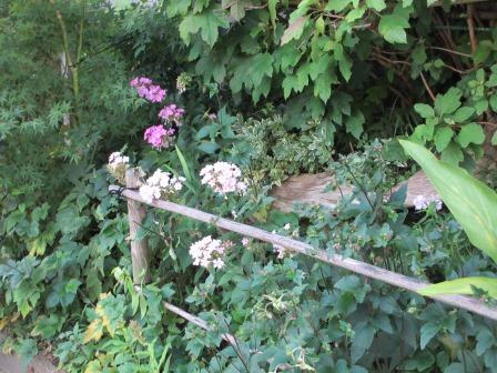 晩夏の庭_a0243064_7185330.jpg