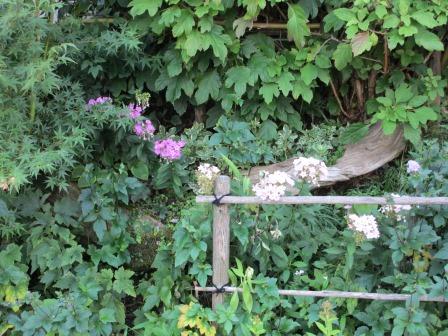 晩夏の庭_a0243064_7193689.jpg