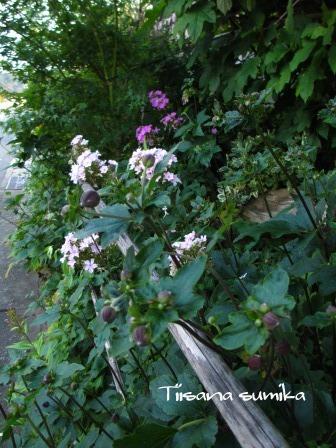 晩夏の庭_a0243064_7201493.jpg