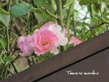 晩夏の庭_a0243064_7294324.jpg