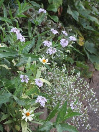晩夏の庭_a0243064_7334154.jpg