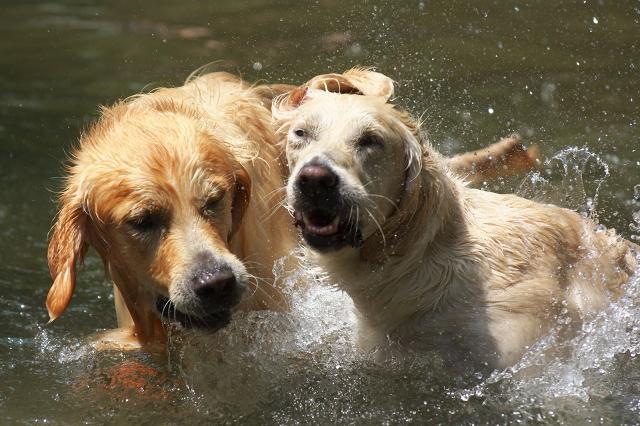 Splash! 1_f0018464_764158.jpg