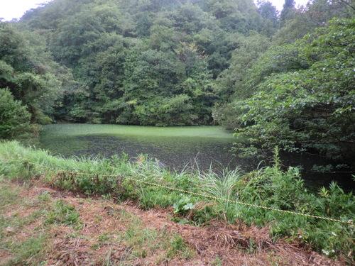 雨の日の孝子の森  by  「仁べ」_e0228405_2333342.jpg