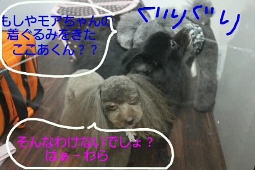 b0130018_21373744.jpg