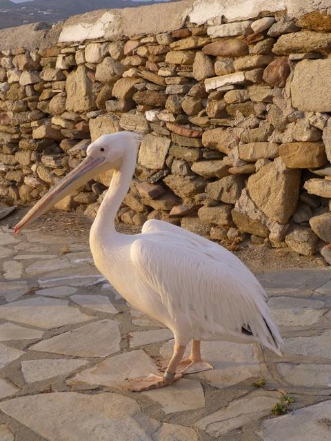 ギリシャ ミコノス島 3日目-4_e0237625_0145650.jpg