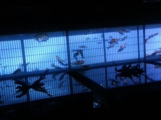 日本橋アクアリウム!_b0259538_1224210.jpg