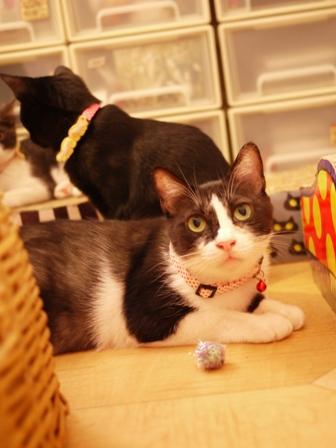 こっそり遊ぶ猫 らぃらてぃぁら編。_a0143140_203162.jpg