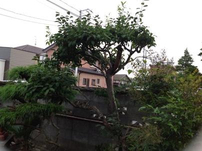 植木剪定_c0186441_21201286.jpg