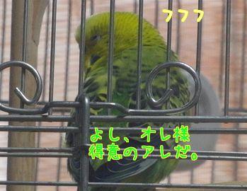 f0196665_9311069.jpg