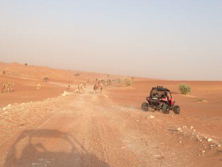 慌てて砂漠走るなう。_e0066474_1321246.jpg