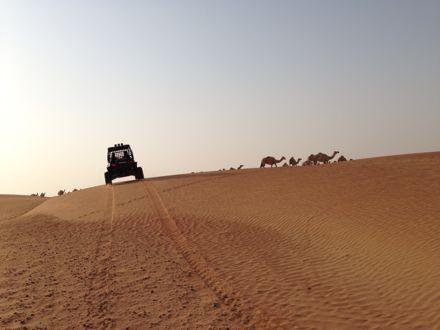慌てて砂漠走るなう。_e0066474_1322060.jpg