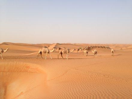 慌てて砂漠走るなう。_e0066474_1322334.jpg