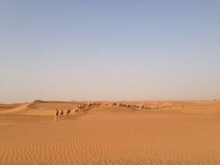 慌てて砂漠走るなう。_e0066474_1322499.jpg