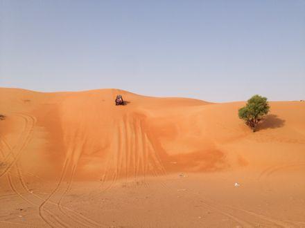 慌てて砂漠走るなう。_e0066474_1322588.jpg