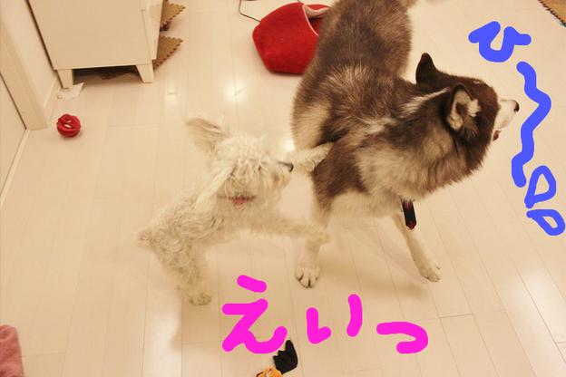 しえろちゃん、全国区デビュー☆_c0245679_1059440.jpg